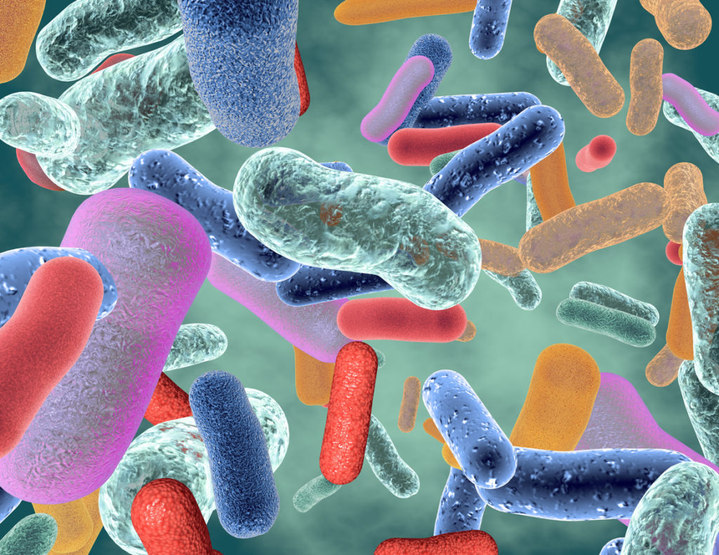 Microscopic view of healthy bacteria that make up probiotics which, can help fight COVID-19 with nutrition.